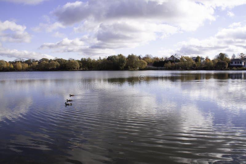 Een meer met drie eenden en bezinning betrekt stock afbeeldingen