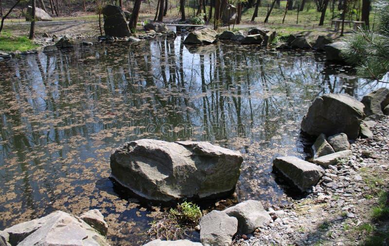 Een meer in een tuin stock afbeelding