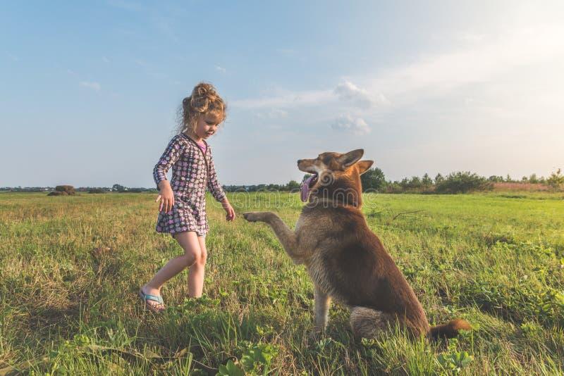 Een meisje, de Zonnige dag die van de kindzomer de hond op een leiband lopen, sheph royalty-vrije stock foto's