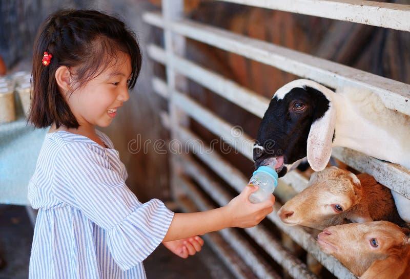 Een meisje die een fles melk voeden aan een groep geiten stock afbeeldingen