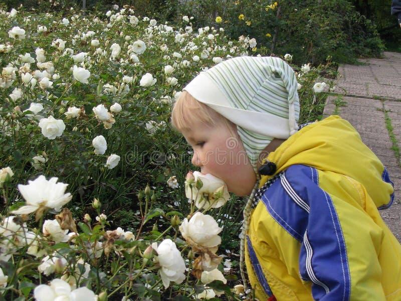 Een meisje en rozen royalty-vrije stock afbeeldingen