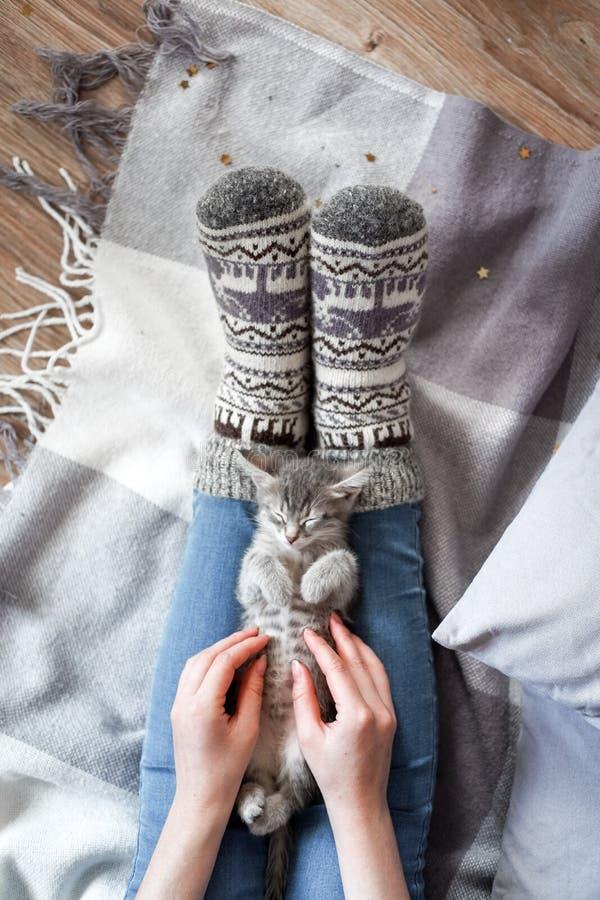 Een meisje in Kerstmissokken raakt de handen van een leuk grijs katje royalty-vrije stock afbeeldingen
