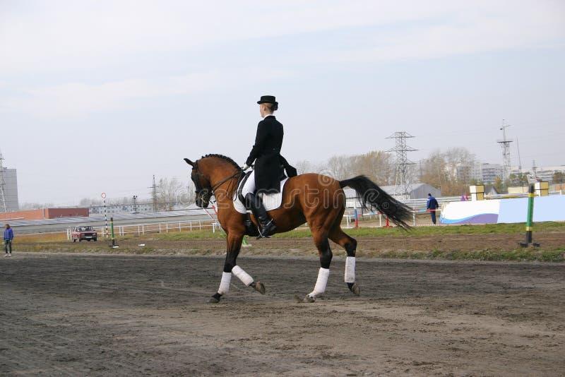 Een meisje op een paard stock fotografie