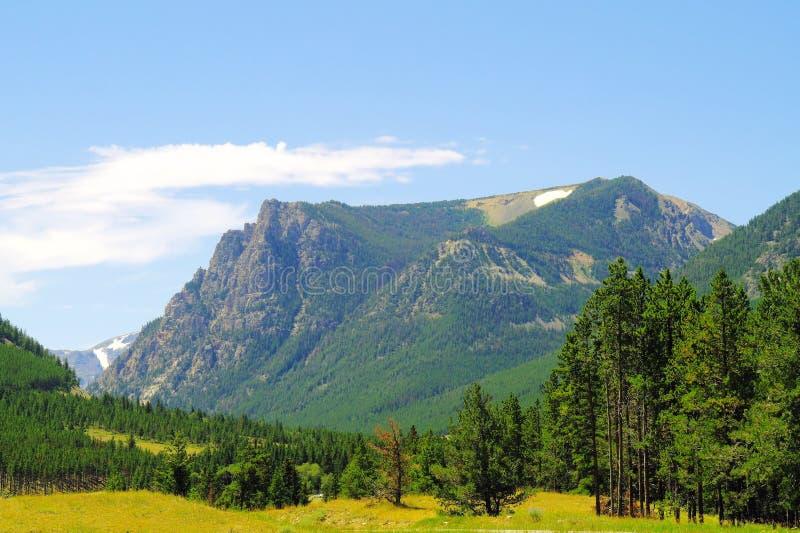 Een mening in Custer National Forest royalty-vrije stock fotografie