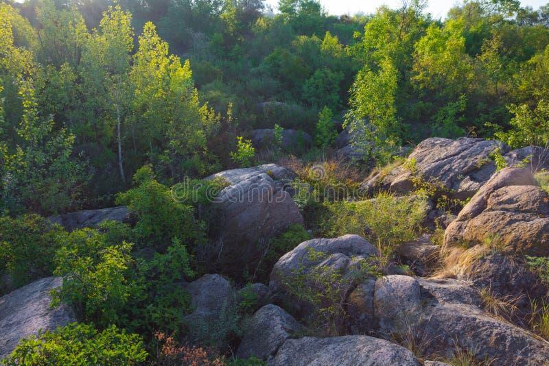 Een mening van de keien door een dicht bos in de stralen van zonsopgang worden omringd die stock foto