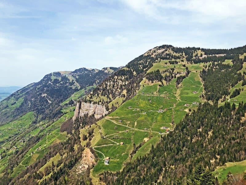 Een mening van de naaldbossen en de weilanden op de hellingen van Rigi-berg stock afbeelding