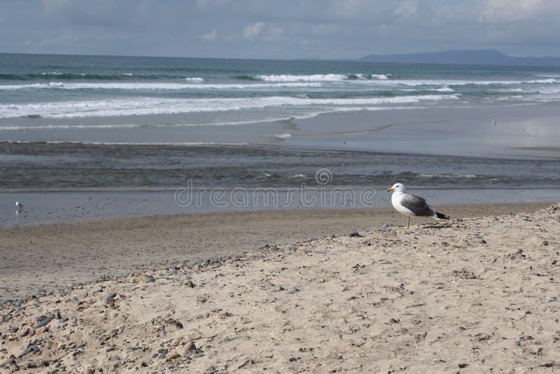 Een mening van de zeemeeuw` s kust van blauwgroene oceaan at low tide stock fotografie