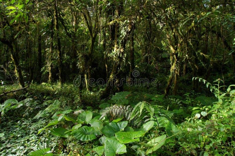 Een mening van dichte regenwoudvegetatie met ocationalzonnestralen stock afbeelding