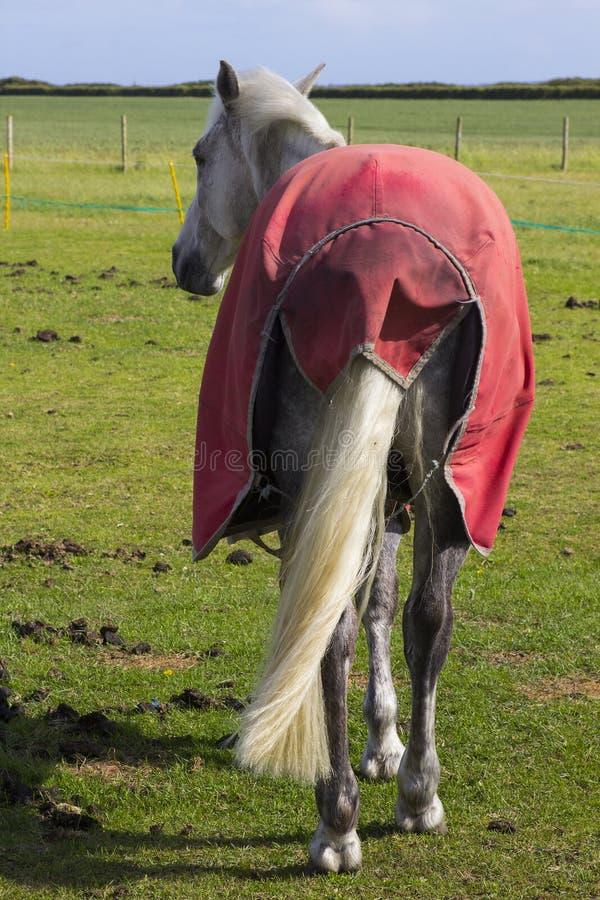 Een mening van een paardenuiteinde met achterdeel en staart aangezien het zich op een gebied op een heldere zonnige dag bevindt stock afbeeldingen
