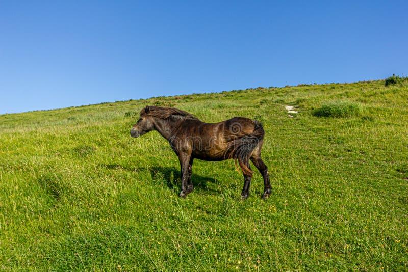 Een mening van a kastanjewild paard op een groene heuvelhelling onder een majestueuze blauwe hemel royalty-vrije stock foto's