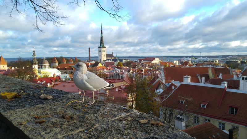 Een mening van Tallinn, Estland royalty-vrije stock afbeeldingen