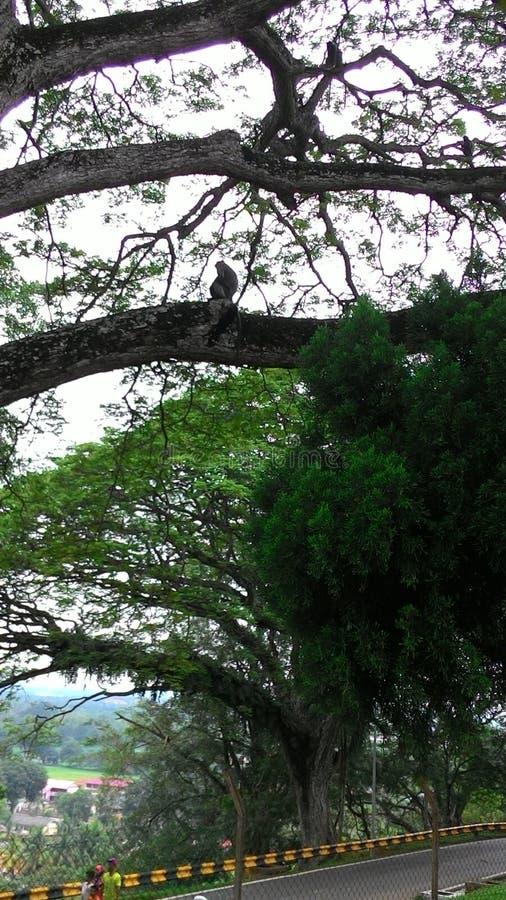 Een mening vanaf de bovenkant, Aap in de boom die menselijk ras waarnemen royalty-vrije stock foto