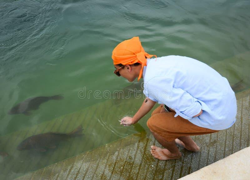 Een mens die met vissen in de vijver spelen stock afbeelding
