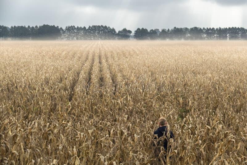 Een mens die zich alleen op een gebied van graan bevinden royalty-vrije stock afbeeldingen