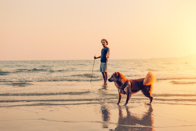 Een mens en een hond bevinden zich op het strand en de zonsondergang, zonsopgang stock foto's