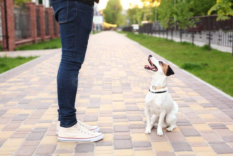 Een mens en zijn hond lopen in het park Sporten met huisdieren Geschiktheidsdieren De eigenaar en Jack Russell lopen onderaan str royalty-vrije stock foto
