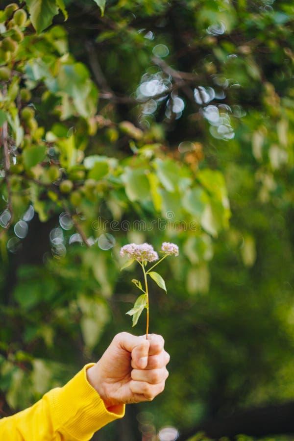 Een mens houdt een bloem tegen de vage achtergrond van bomen en gras bokeh, close-up, picknick, de zomer stock afbeeldingen