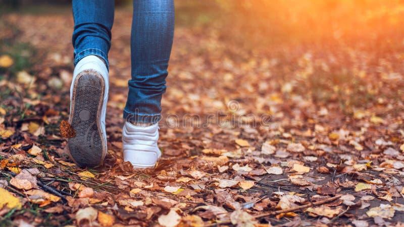 Een mens houdt op lopend Het meisjes` s meisje ` s Hete meisjes op de aard in het park onder de bladeren van geel De herfst stock fotografie