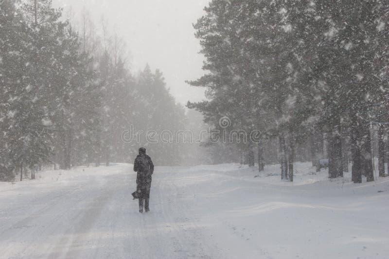Een mens loopt op een weg in het hout in de winter stock foto