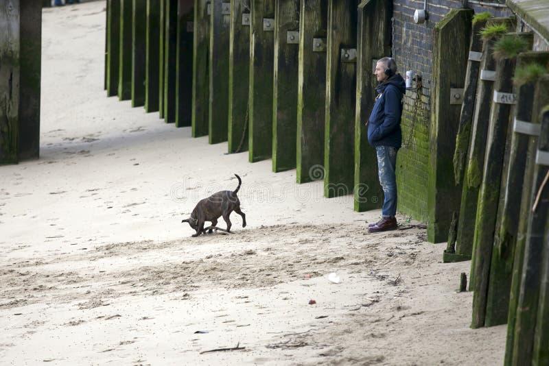 Een mens luistert aan muziek op hoofdtelefoons De hondstormlopen langs het zandige strand at low tide Zuidenbank van de Theems stock foto