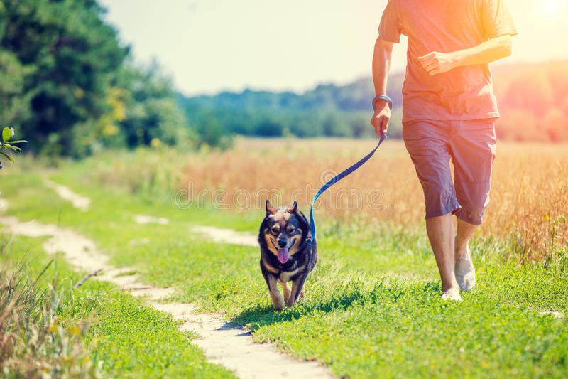 Een mens met een hond loopt langs de weg stock afbeeldingen
