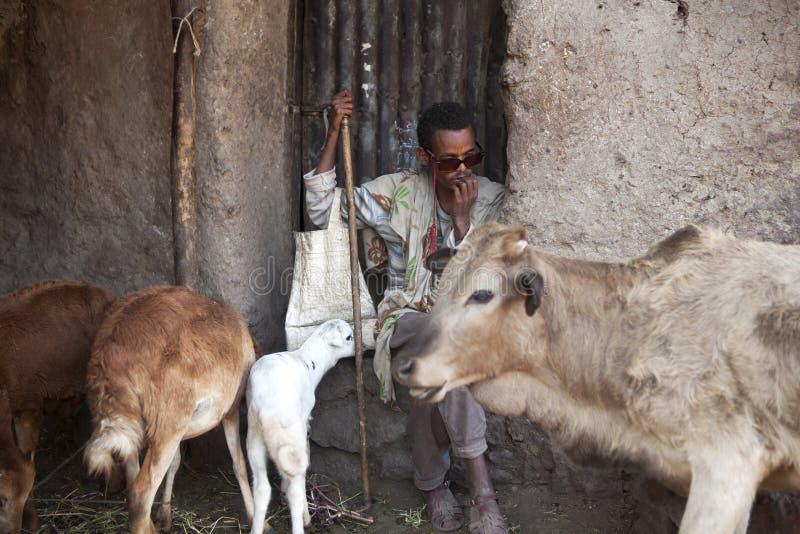 Een mens met landbouwbedrijfdieren, Ethiopië royalty-vrije stock foto