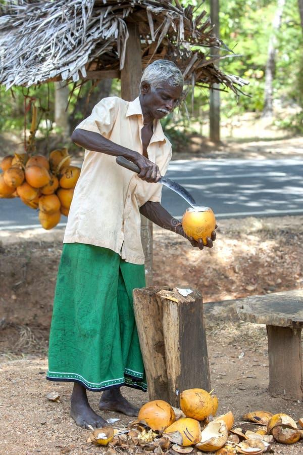 Een mens van Sri Lankan snijdt open de bovenkant van een Koning Coconut in Sigiriya stock afbeeldingen