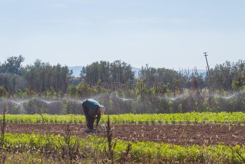 Een mens werkt op een mooi gebied in Abruzzo Italië stock foto
