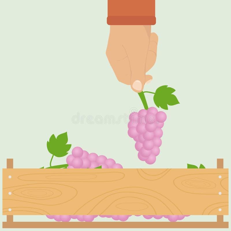 Een mensen` s hand met een bos van druiven stock illustratie