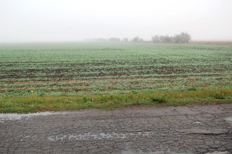 Een mistig weatgebied dichtbij een oude landelijke weg op een regenachtige de herfstdag royalty-vrije stock foto