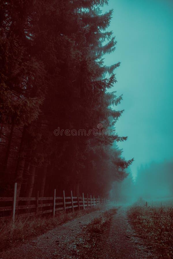 Een mistige weg in het platteland royalty-vrije stock foto