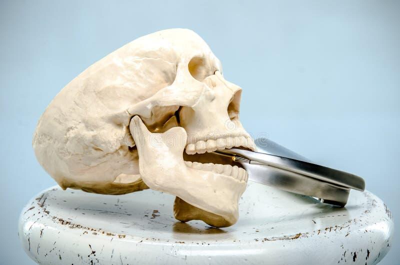 Een model van een menselijke schedel met een laryngoscoop in de mond op een witte oppervlakte royalty-vrije stock afbeelding