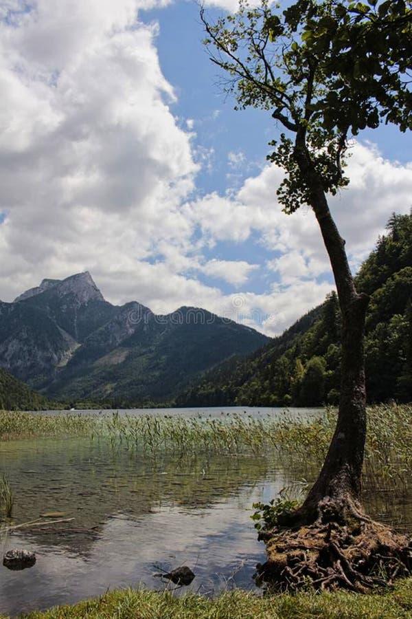 een moeras in de bergen met een boom royalty-vrije stock afbeeldingen