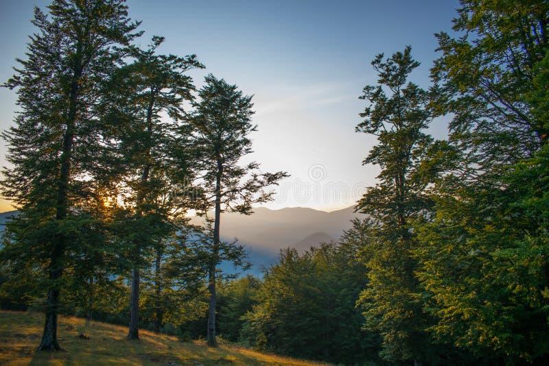 Een mooi berglandschap bij zonsondergang De zon daalt achter de bomen Een schitterend licht stock afbeeldingen