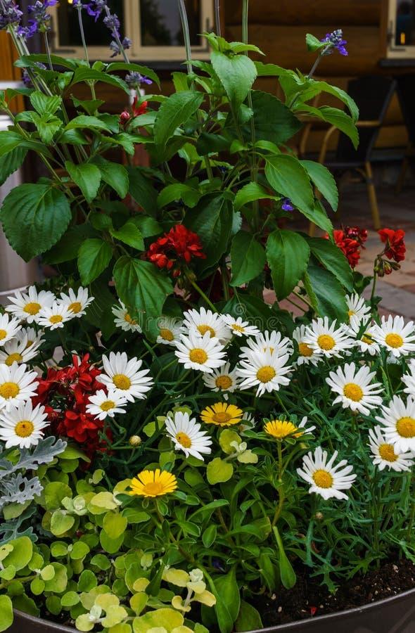 Een mooi boeket van diverse verse die bloemen in een bloempot worden geplant stock foto's