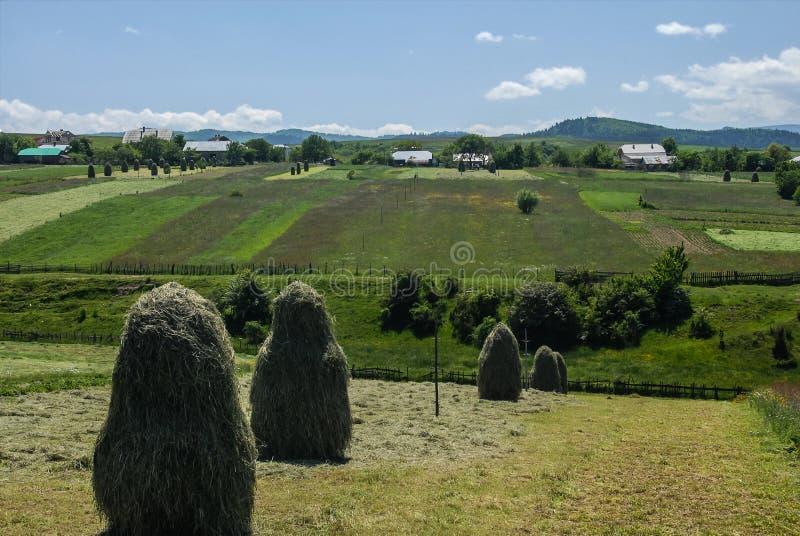 Een mooi de zomerlandschap van groene landbouwgebieden met hooi en dorpshuizen op de achtergrond, de Westelijke Oekraïne royalty-vrije stock afbeeldingen