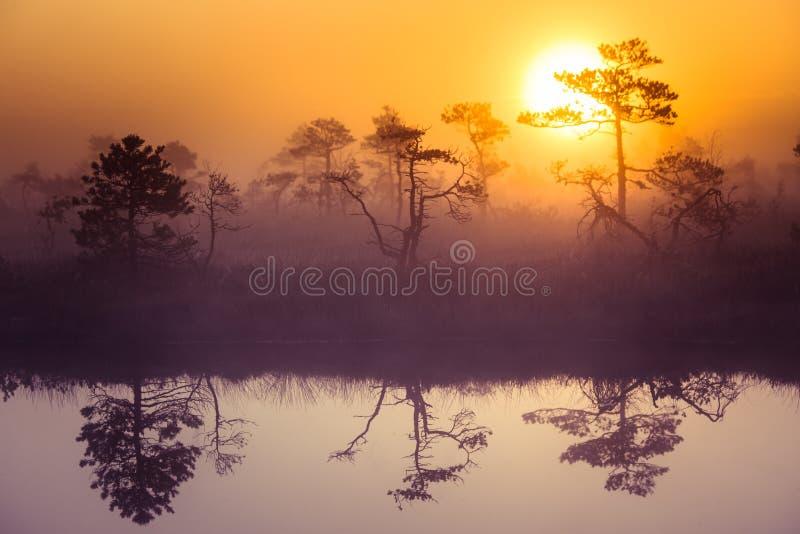 Een mooi, dromerig ochtendlandschap die van zon boven een nevelig moeras toenemen Kleurrijke, artistieke blik stock foto's
