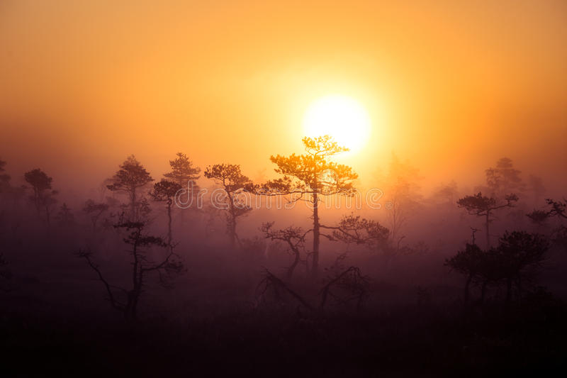 Een mooi, dromerig ochtendlandschap die van zon boven een nevelig moeras toenemen Kleurrijke, artistieke blik stock foto