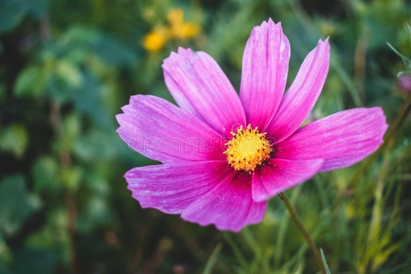 Een mooi gebied van bloemen in Nederland tijdens de lente royalty-vrije stock foto's
