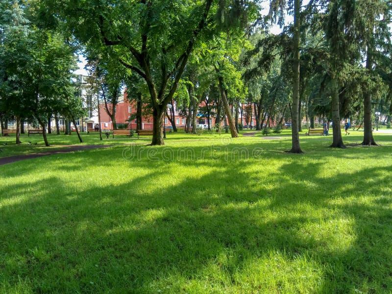 Een mooi groen park met groene gras en bomen stock afbeelding