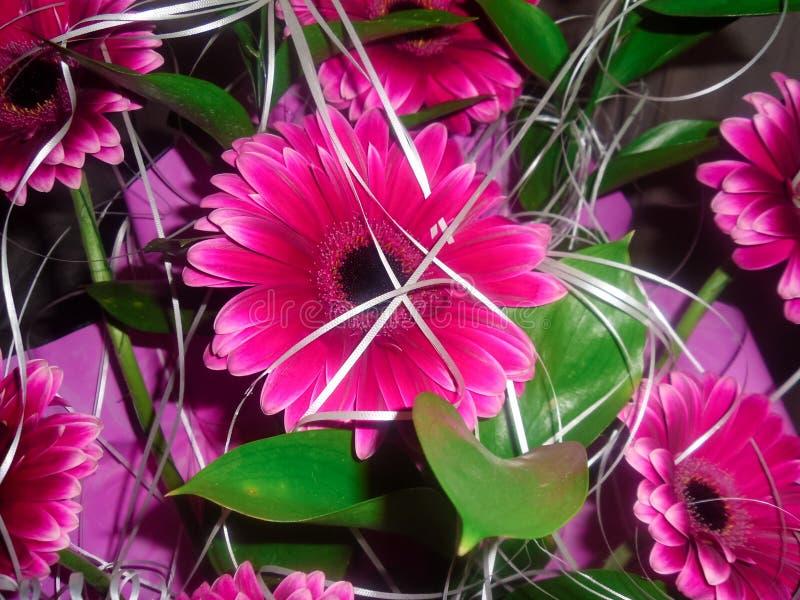 Een mooi helder roze boeket van grote madeliefjes is een boeket van gerberas stock foto's