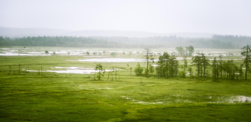 Een mooi moeraslandschap in Finland - dromerige, mistige blik royalty-vrije stock fotografie