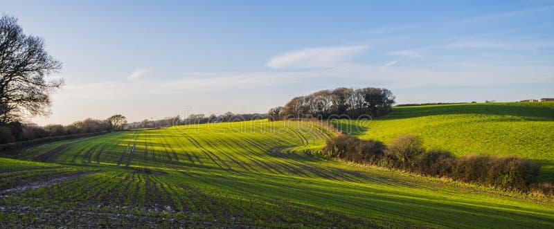 Een mooi panorama van nieuwe gewassen op landbouwgrond in Combe-Vallei, Oost-Sussex, Engeland royalty-vrije stock foto
