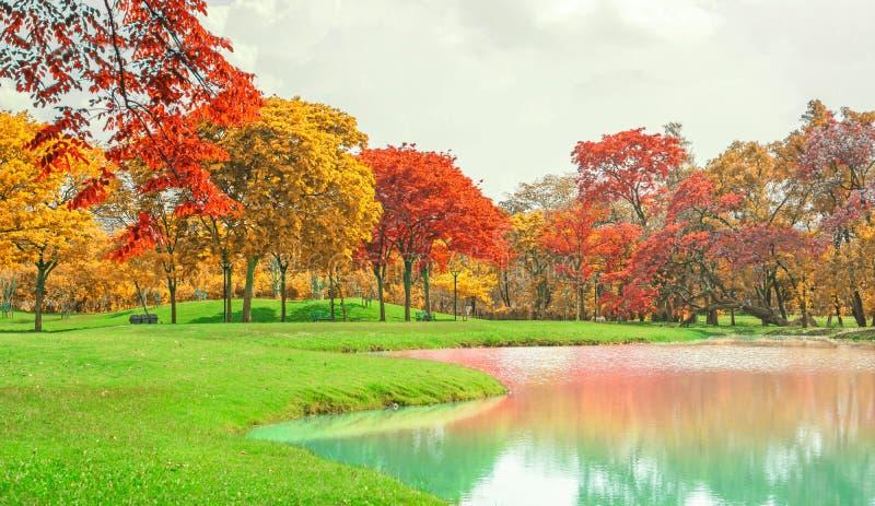 Een mooi park in de herfstseizoen, gele en oranje kleurrijke bladeren van de bomen op groen gras vers gazon dichtbij een meer stock afbeelding