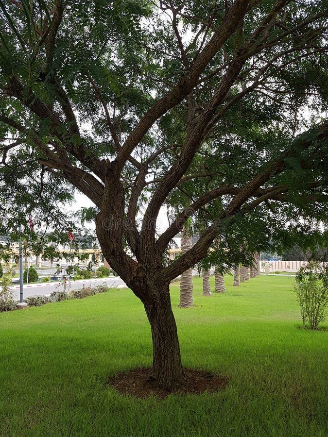 Een mooi park met prachtig groen in Algiers stock afbeeldingen