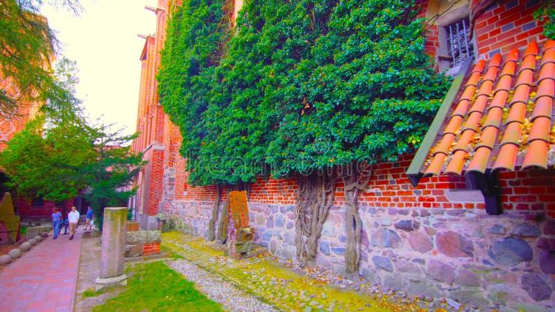 Een mooi schot van bomen die aan de muur en aan een passage grenzen aan een kleine tuin 1; 2019 stock foto