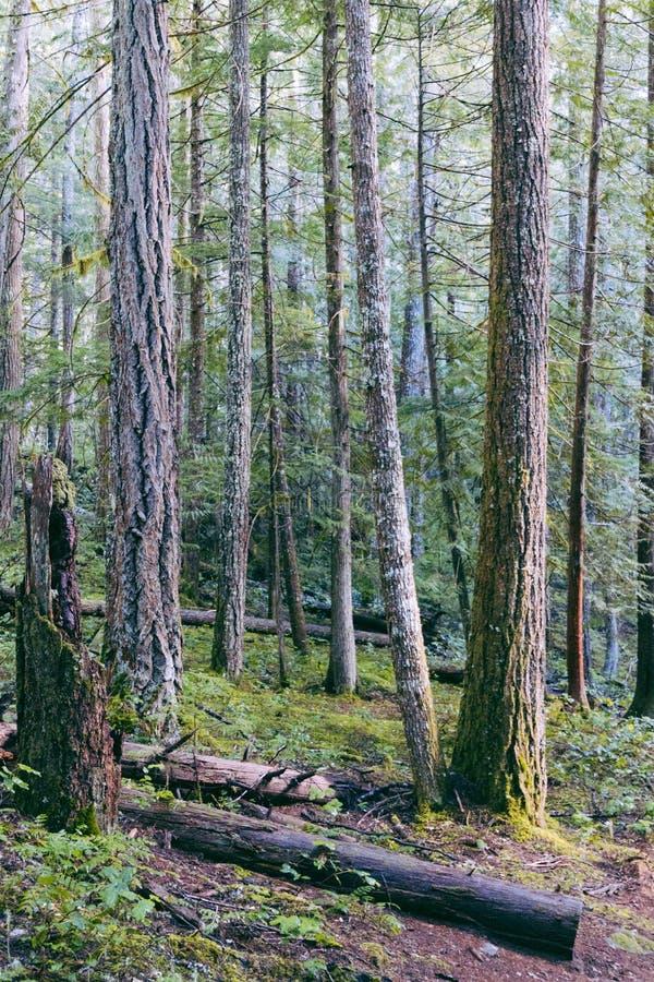 Een mooi schot van een bos stock fotografie