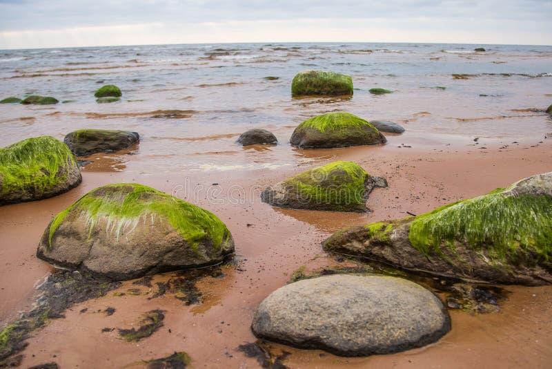 Een mooi strandlandschap met een groen mos behandelde stenen Algen die op kustrotsen groeien stock fotografie