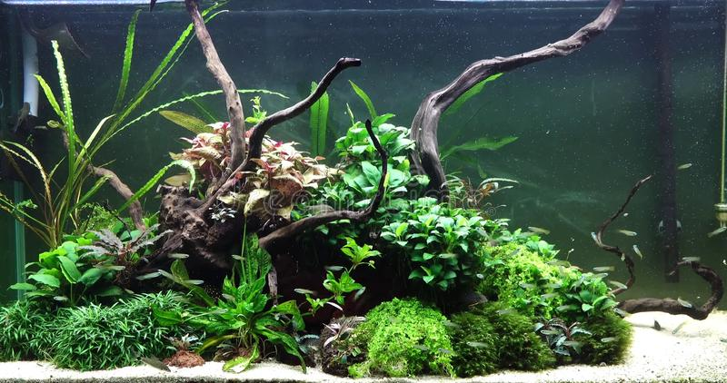 Een mooi zoetwateraquarium met levende planten stock foto