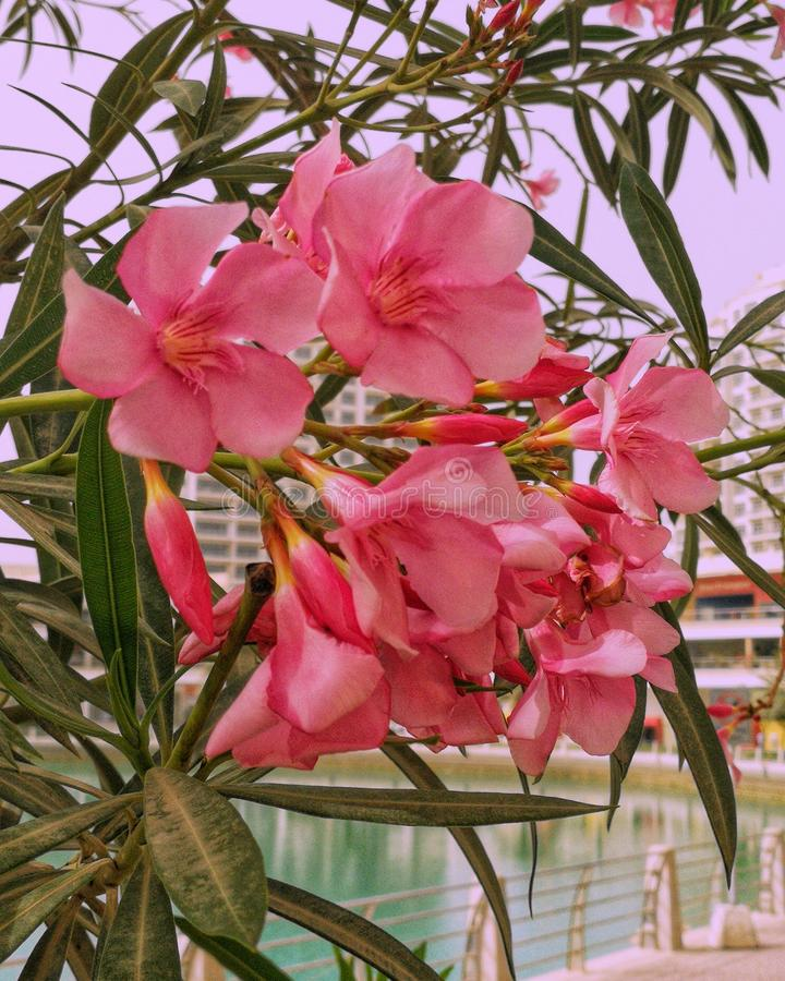 Een mooie bloem royalty-vrije stock afbeelding